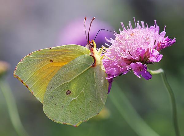 Det är meningen att du ska avslöja din högsta potential. Som larven som förvandlas till en fjäril.